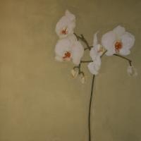 Storczyk 100/70 cm olej,